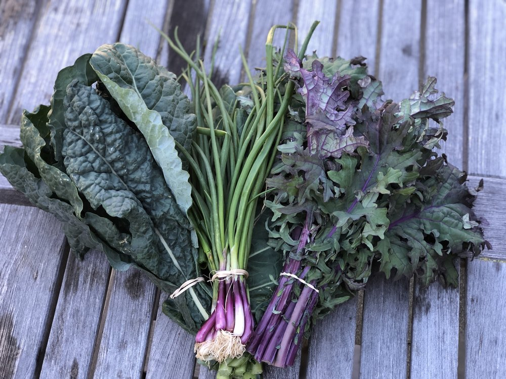 Two types of kale (toscano and red Russian) surround a bunch of scallions.