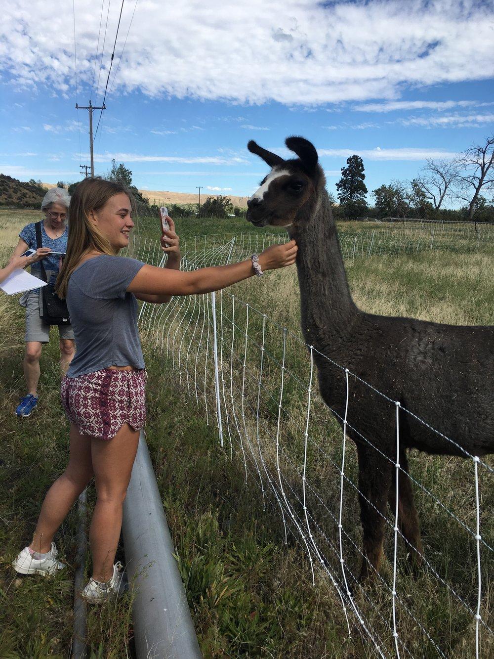 Finn the guard llama makes a gracious host.