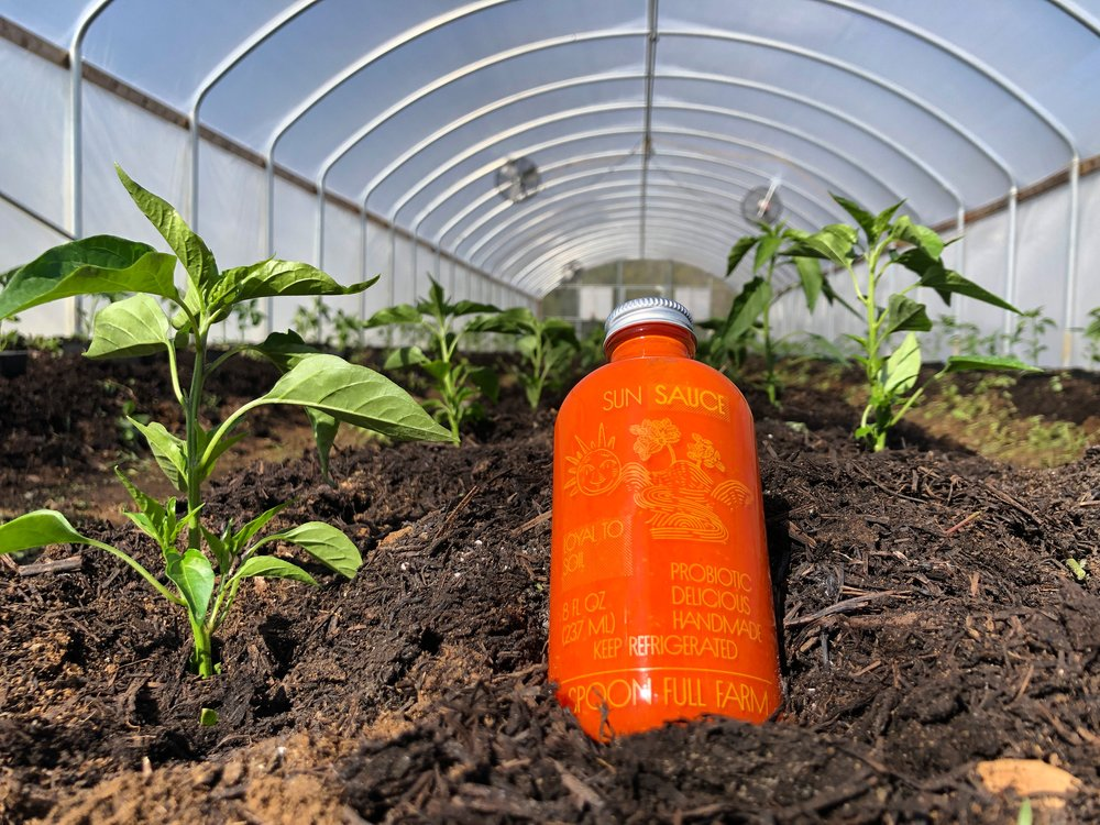 A bottle of 2018 Sun Sauce mentoring some 2019 hot peppers.