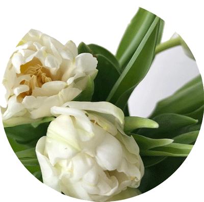 FLOWER-INDEX_TULIP.png