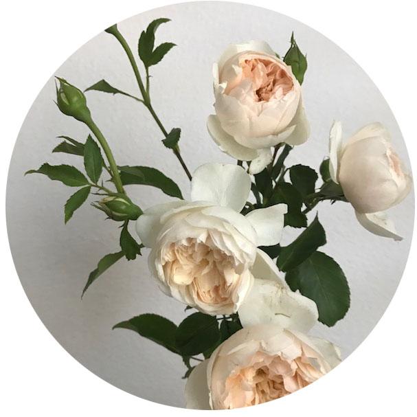 FLOWER INDEX_GARDENROSE2.jpg