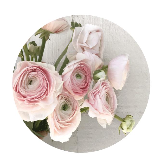 FLOWER-INDEX_RANUNCULUS.png