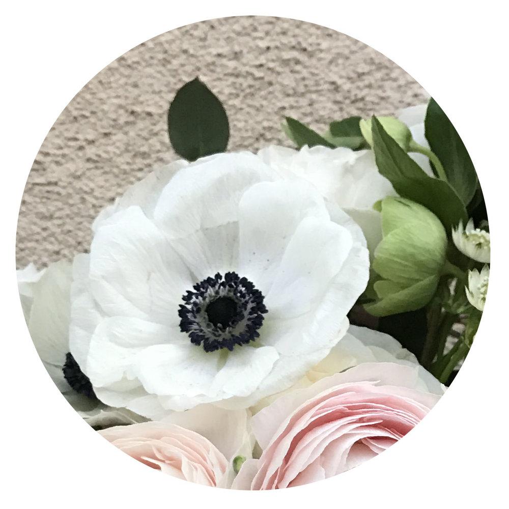FLOWER INDEX_ANEMONE.jpg