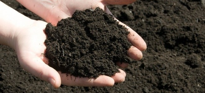 Soil & Compost -
