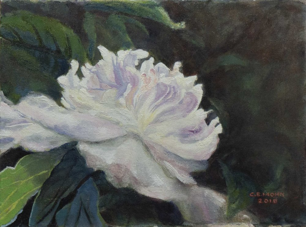 Peony in Tennessee .jpg
