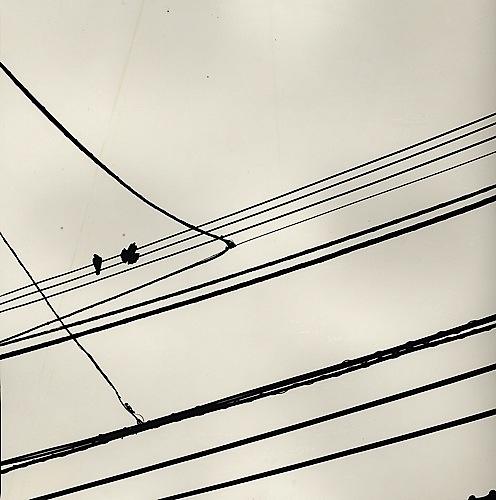 Lines and Birds #20 [Sketchbook Series, Aerial], 2001