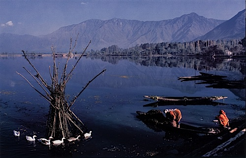 Two Women Collecting Lotus Leaves, with ducks, Dal Lake Kashmir, India, 1982