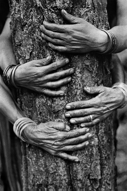 Pamela Singh, Chipko Tree Huggers of the Himalayas #75 , 1994