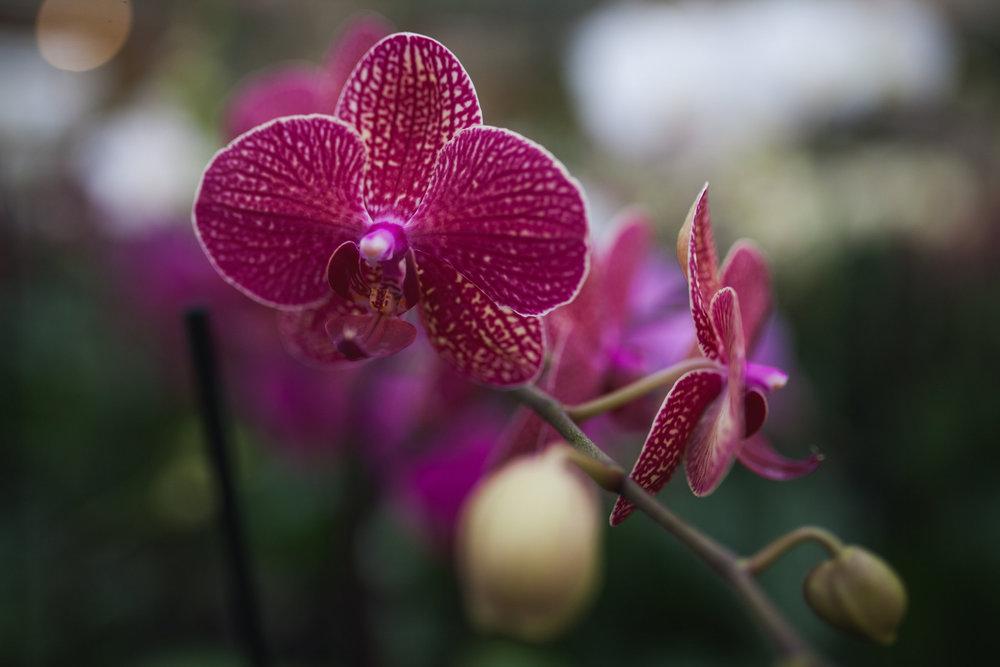 Orchid Farm-Jan-2018-0013.jpg