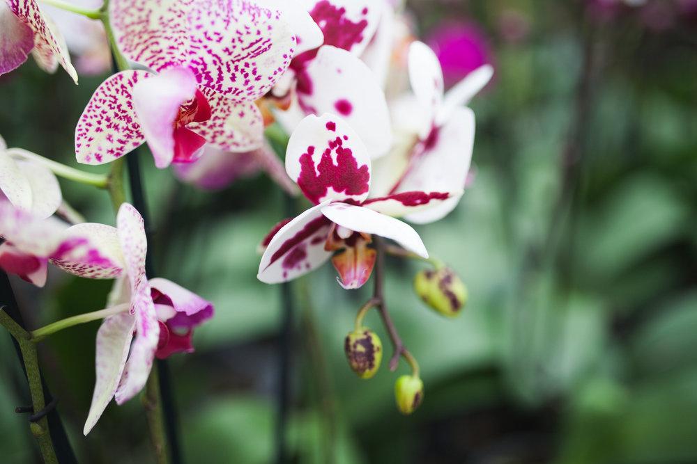Orchid Farm-Jan-2018-0014.jpg
