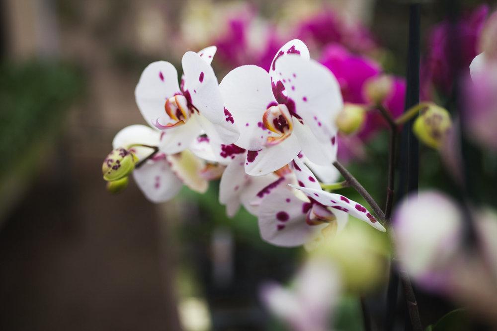 Orchid Farm-Jan-2018-0015.jpg