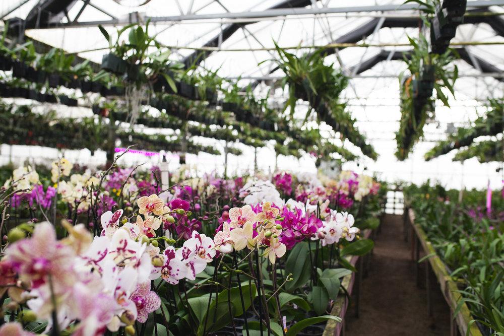 Orchid Farm-Jan-2018-0019.jpg