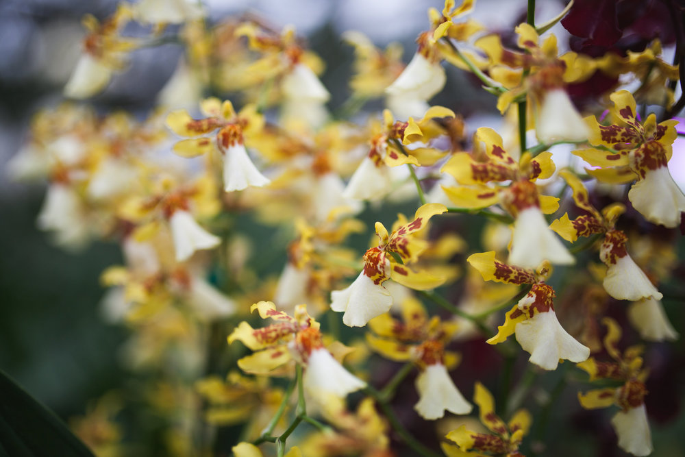 Orchid Farm-Jan-2018-0025.jpg