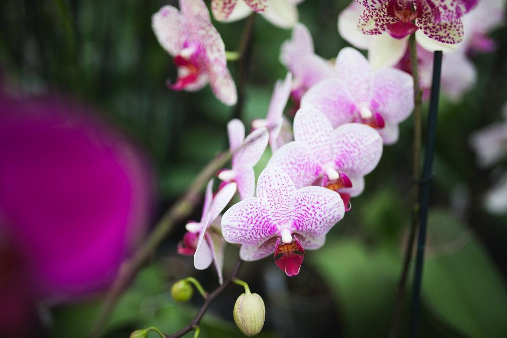 Orchid Farm-Jan-2018-0029.jpg