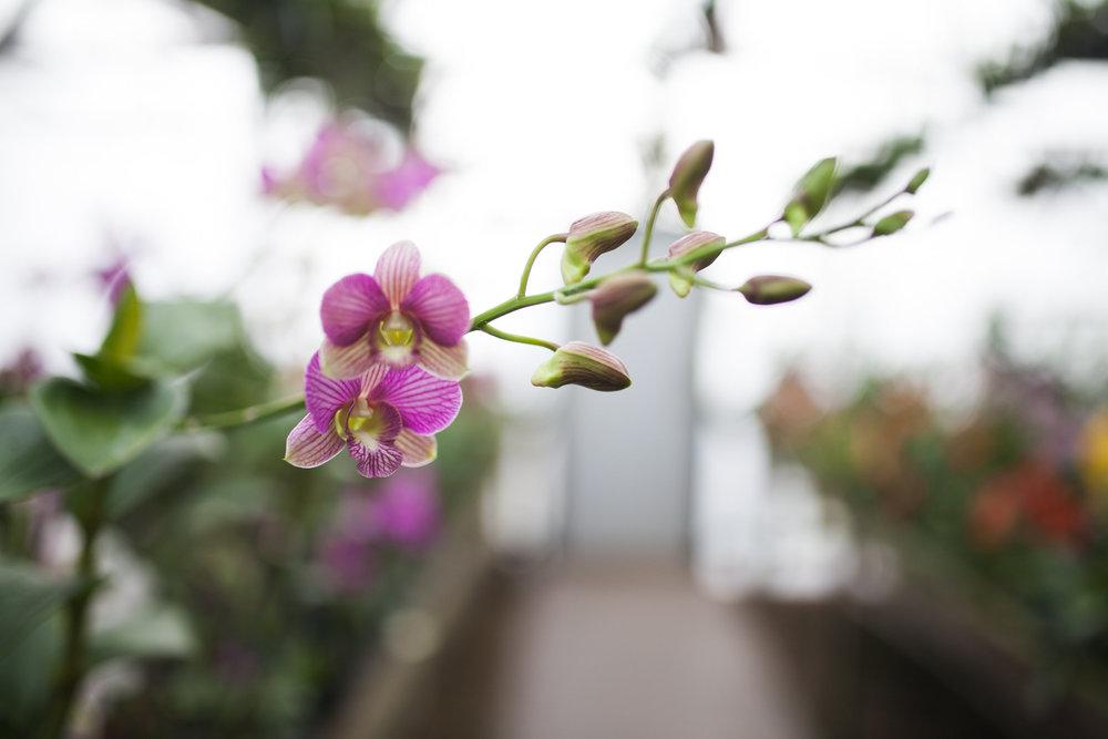 Orchid Farm-Jan-2018-0034.jpg