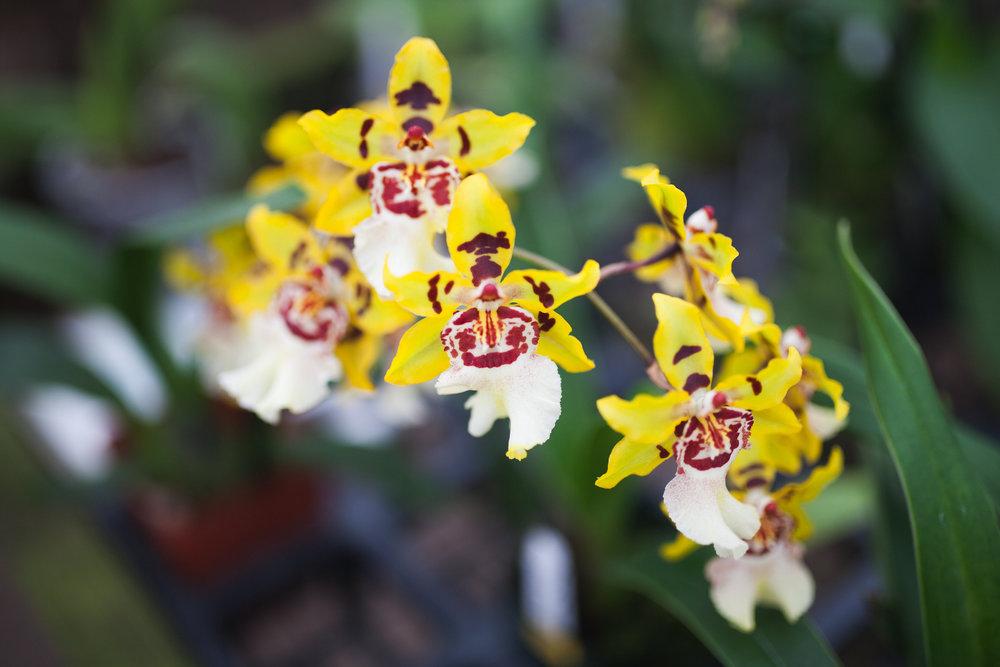 Orchid Farm-Jan-2018-0040.jpg