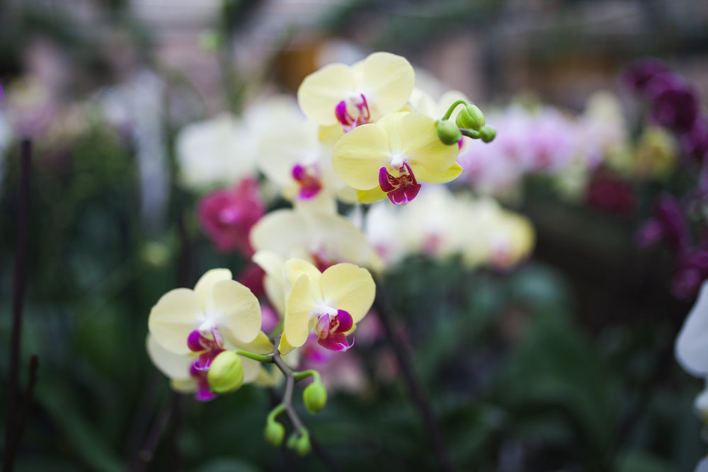 Orchid Farm-Jan-2018-0053.jpg