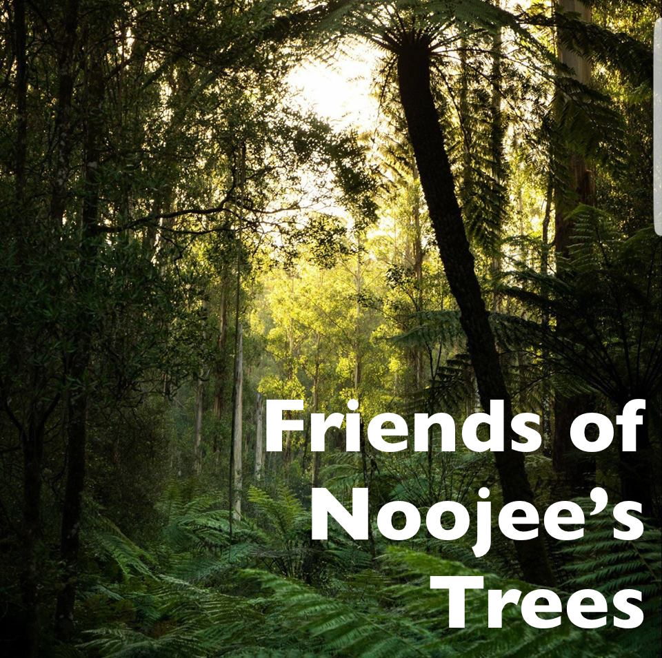 Friends of Noojee's Trees   Noojee is a small town in Gippsland, our trees are worth more more to our town standing tall and upright and not logged by VicForests.