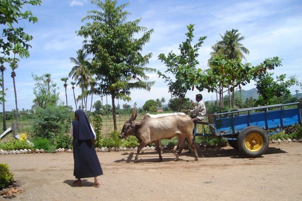 Farm at Adaiyur