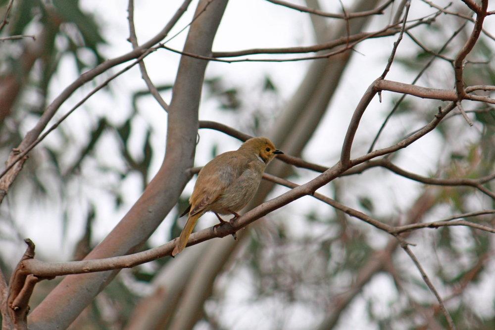bird in tree.JPG