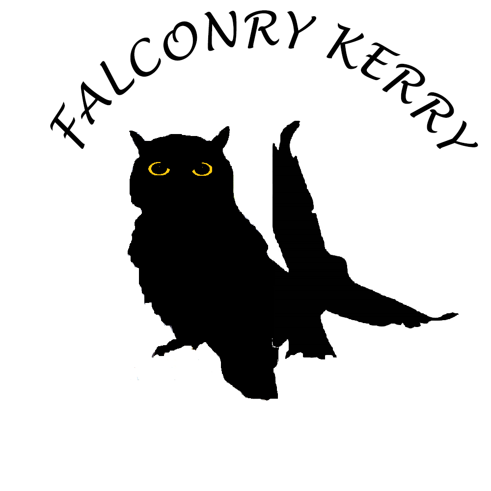 Falconry Experiences!  Falconry in Killarney (ÒvÓ)
