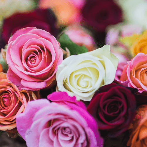 rose_colours_and_their_meanings_1.png