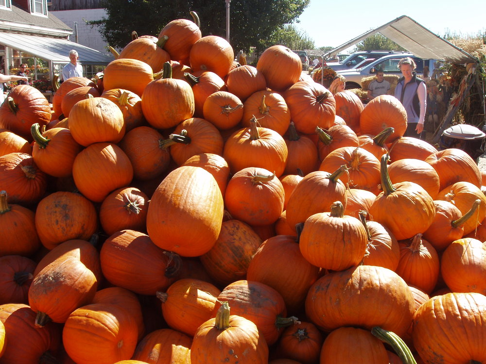 The spirit of fall is at home in the Concord area –with big pumpkins shining in the crisp fall air. It is fun for kids to pick a pumpkin, get some apples, have fresh cider and doughnuts- and take in eh the fall colors.