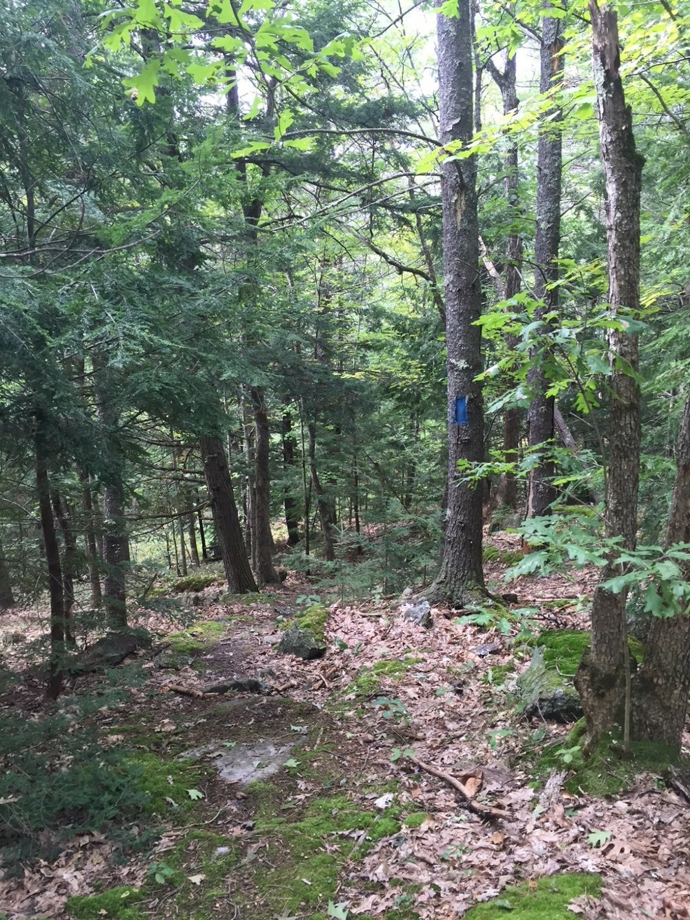 Concord hiking trails