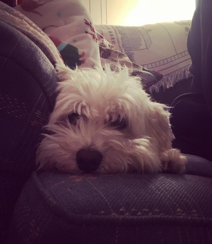 My Dog Slushy