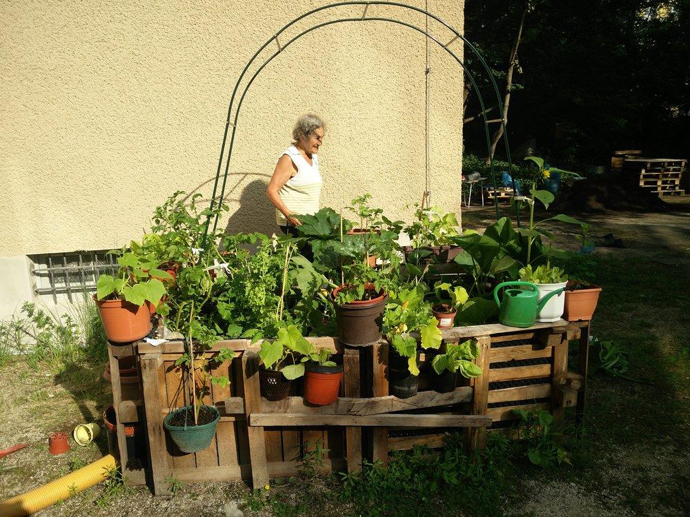 Max Pflanzen garden in Berlin. Photo Credit: Gregor von der Wall