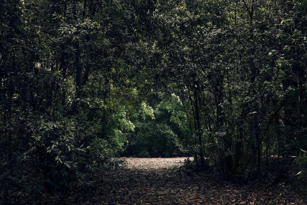 Arboretum Lussich, Maldonado, Uruguay