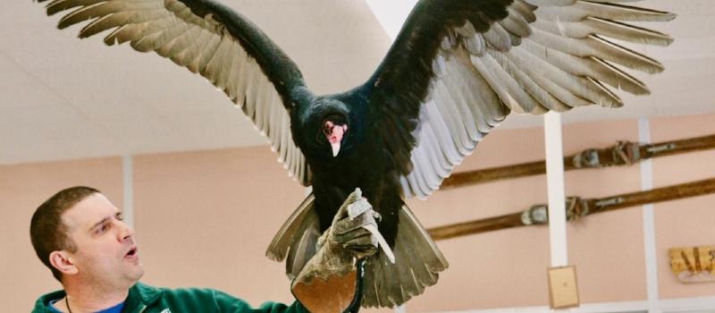 vulture 2 2.jpg