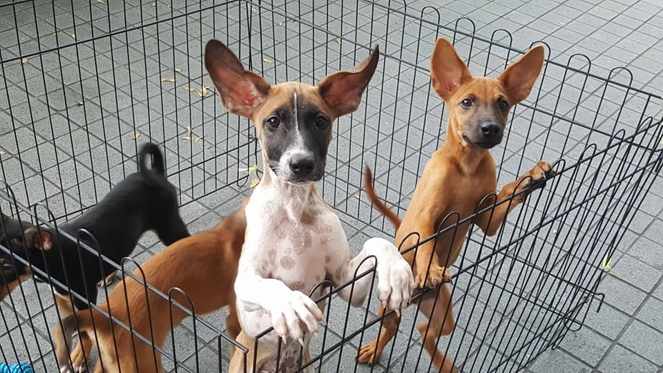 We have over 100 pups and adult dogs ready for a second chance at life.