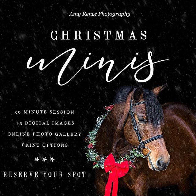 Christmas mini sessions! I'm so excited to be offering Christmas/holiday black backgrounds this year. This is my last promotion of the year! Limited space is available, booking for November and December. These sessions make great gifts for your horsey loved ones and look adorable in print. Inquire now to reserve your spot!