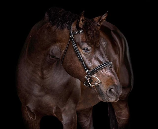 A favorite black background from one of my trips to Florida in 2018✨ I'm so looking forward to the start of WEF! I got to Wellington a few days ago and Wednesday can't come soon enough