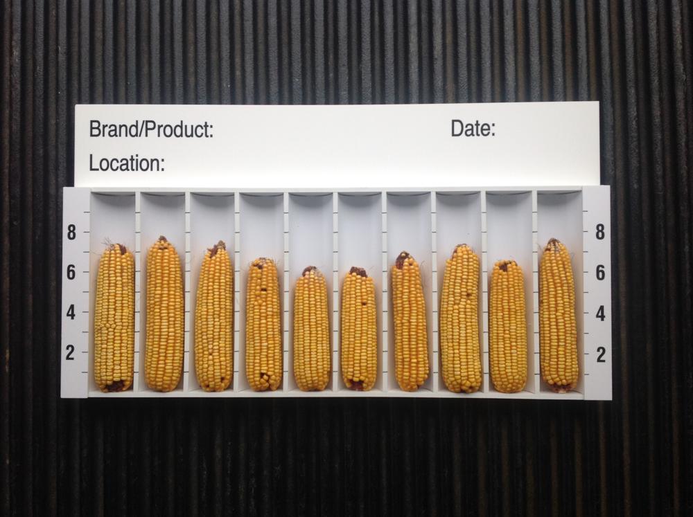 Corn Displays Cpf