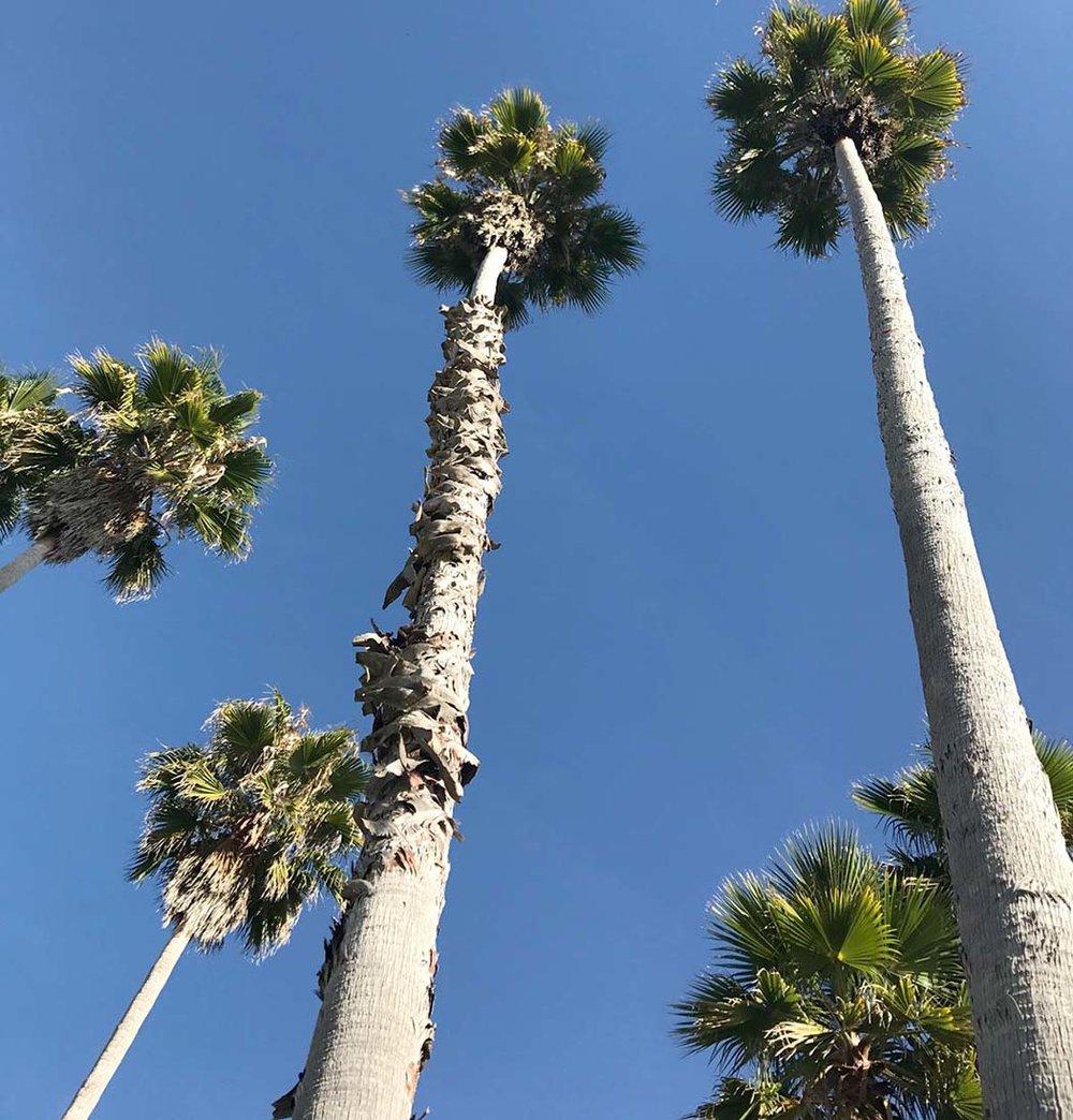 PalmsVG.jpg