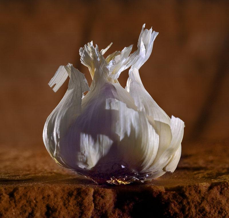 Garlic1.jpg