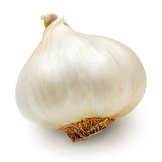 Medium Garlic