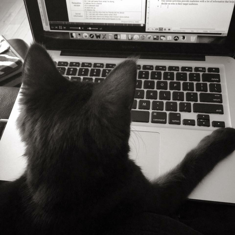 Every writer needs a cat - When I'm not sure what to write about, Tiga offers to help.