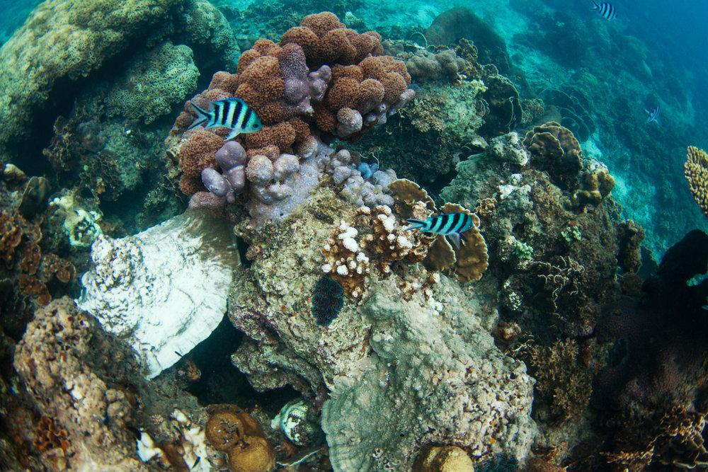 underwater_17.jpg