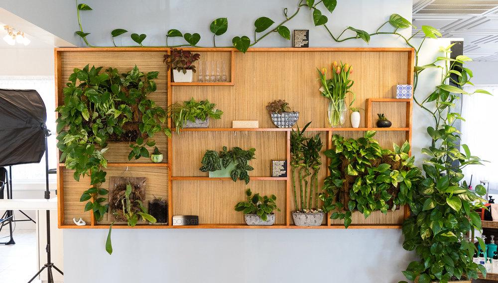 vine-wall-and-shelves-final.jpg