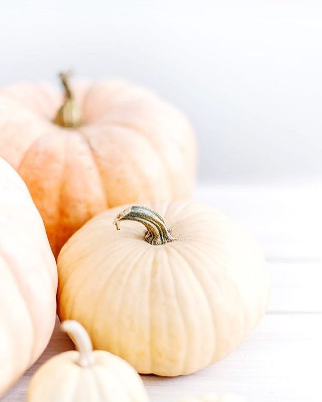 Bring on the pumpkins and cider doughnuts! I'm so happy October is finally here 🎃 It's a time to get cozy and catch up on all the things...I'm going to try and blog a little bit this month about my experience as a VA. If anyone has any topics they'd like me to touch on, feel free to share suggestions down below! I know there's a few solopreneurs and side-hustlers in the mix. I'd love to hear from you! - Hope everyone's having a wonderful Wednesday 🍂 - #virtualassistant #fallvibes #mycreativebiz #risingtidesociety #katemaxstock