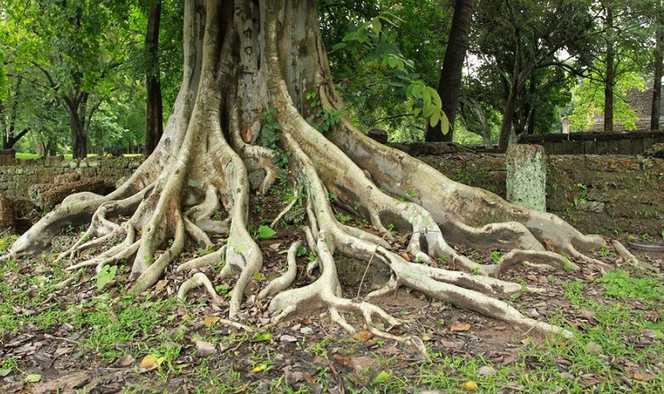 blog-how-tree-roots-cause-problems-in-drains.jpg