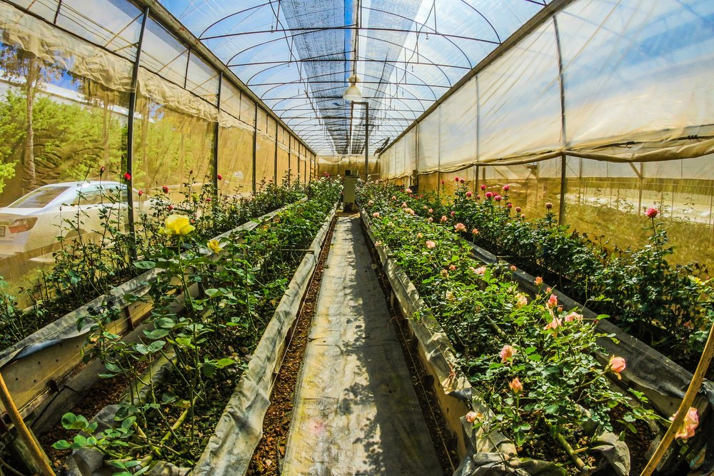 Agricultural and Food Scientist -