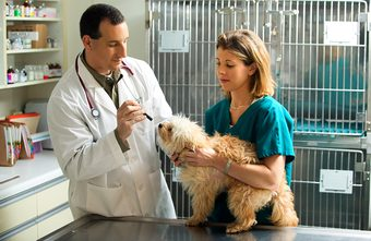 Veterinary Assistants and Laboratory Animal Caretakers -