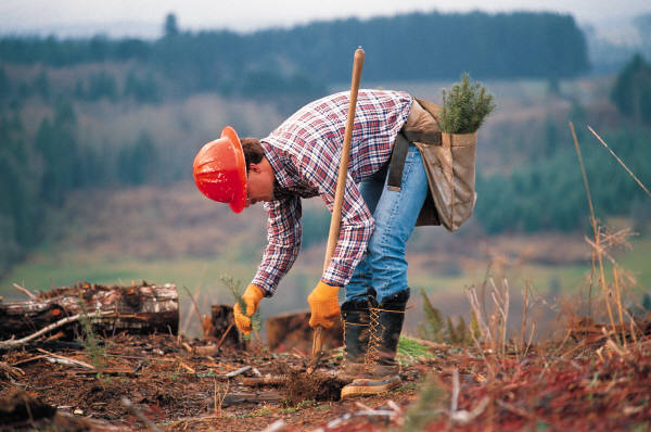 conservation scientists and foresters -
