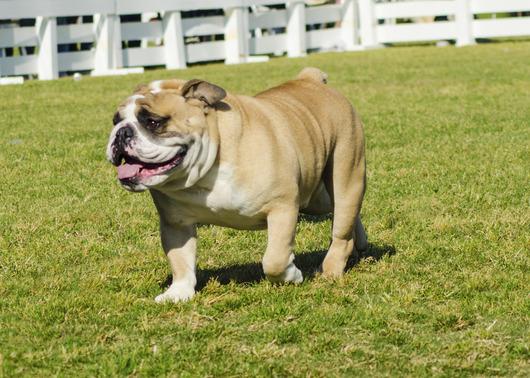 dog-parks-near-cleveland-ohio.jpg