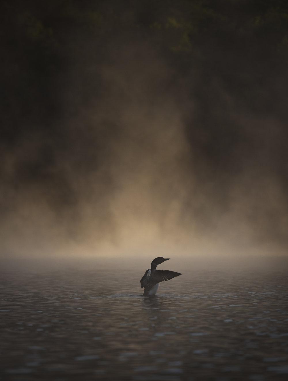 LakeHarrisPaddle-25.jpg