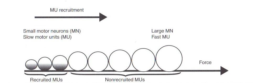 size-principle-1.jpg
